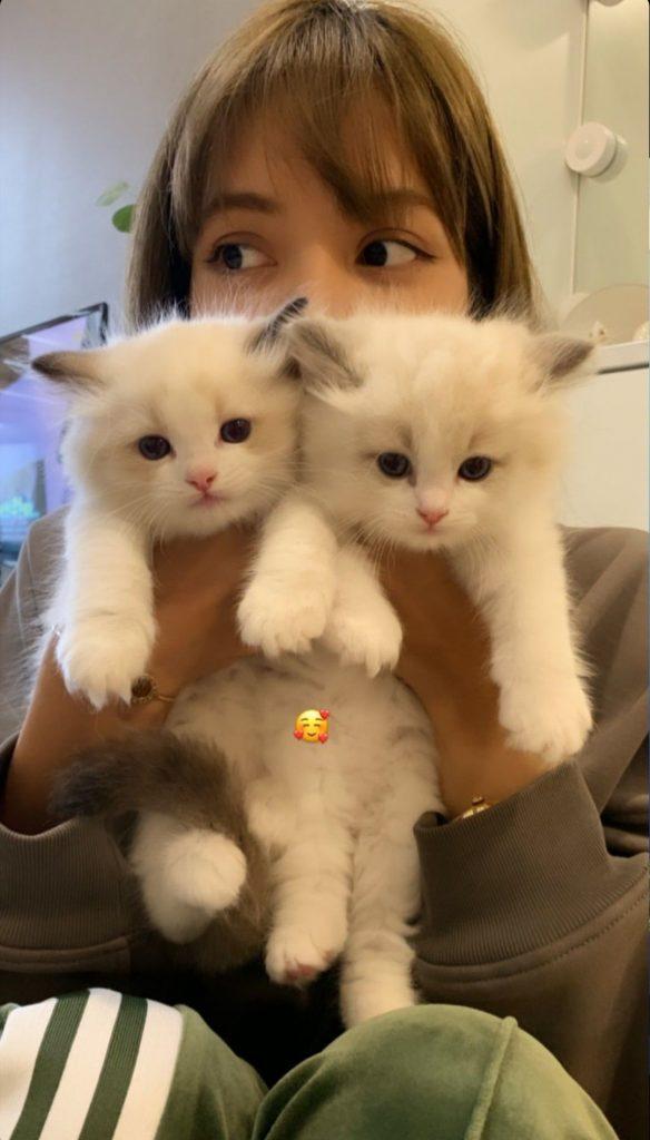 gatitos de lisa manoban